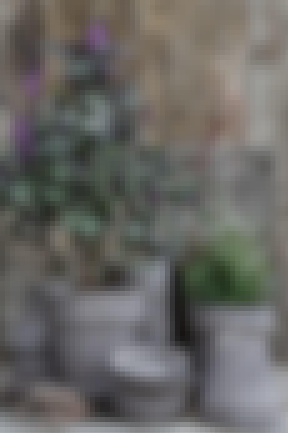 Potter grå terrasse planter
