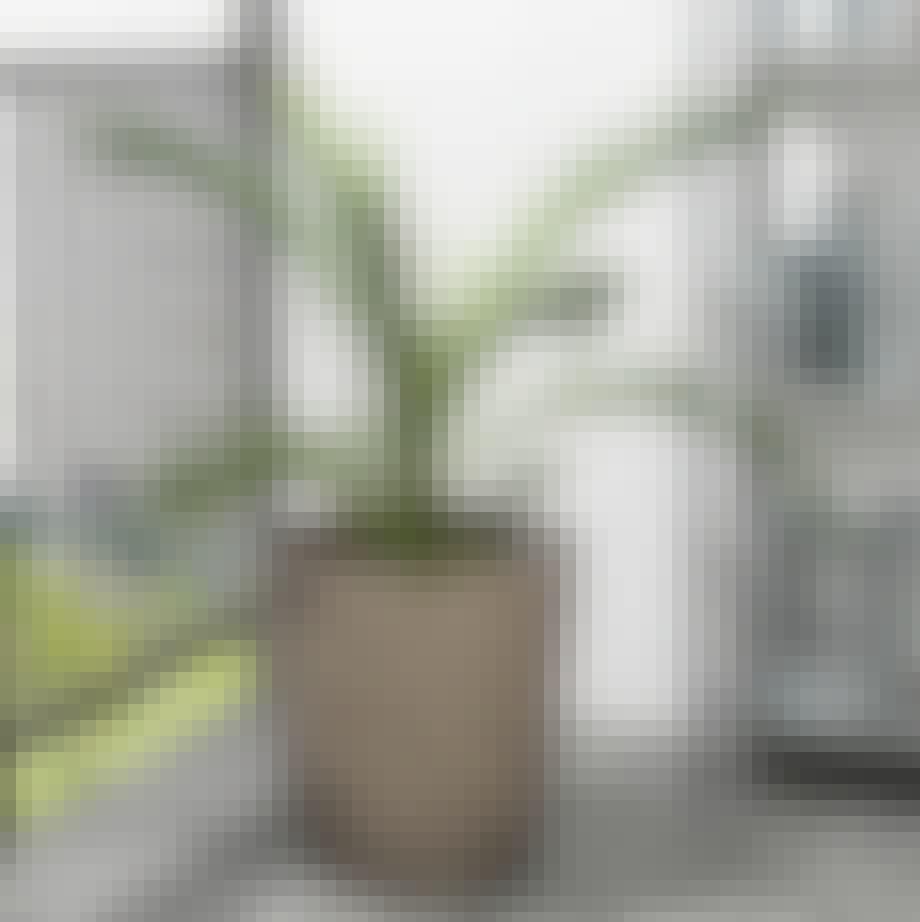 urtepotteskjuler natur udendørs indendørs