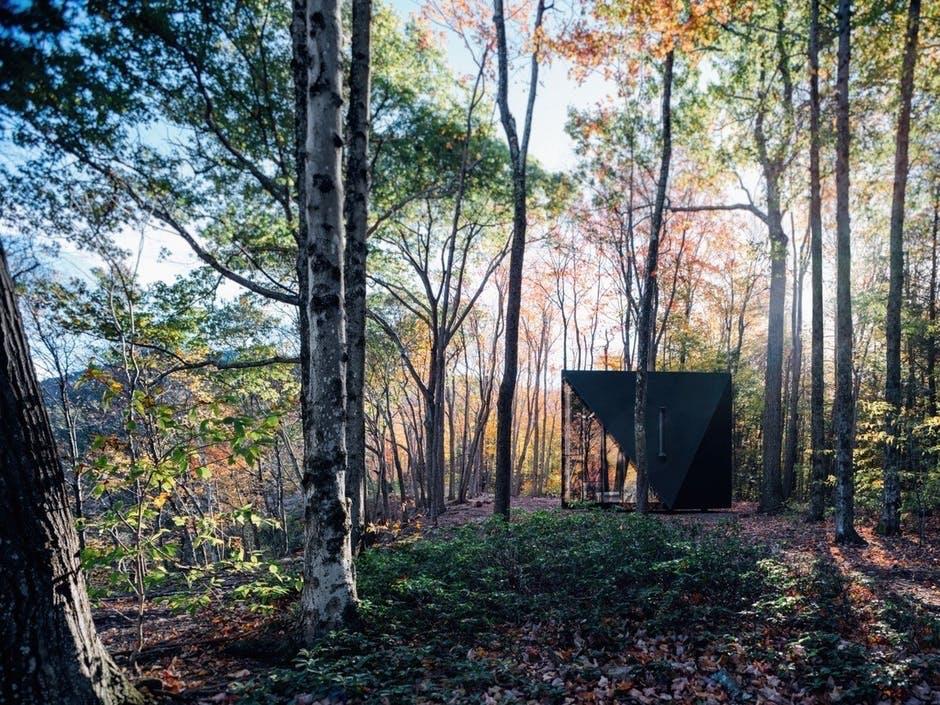 BIG Design hytte skov søren rose studio