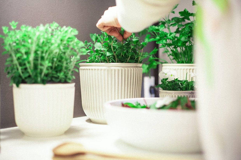 Kähler Hammershøi urtepotteskjuler Greenify planter krydderurter urter køkken køkkenet