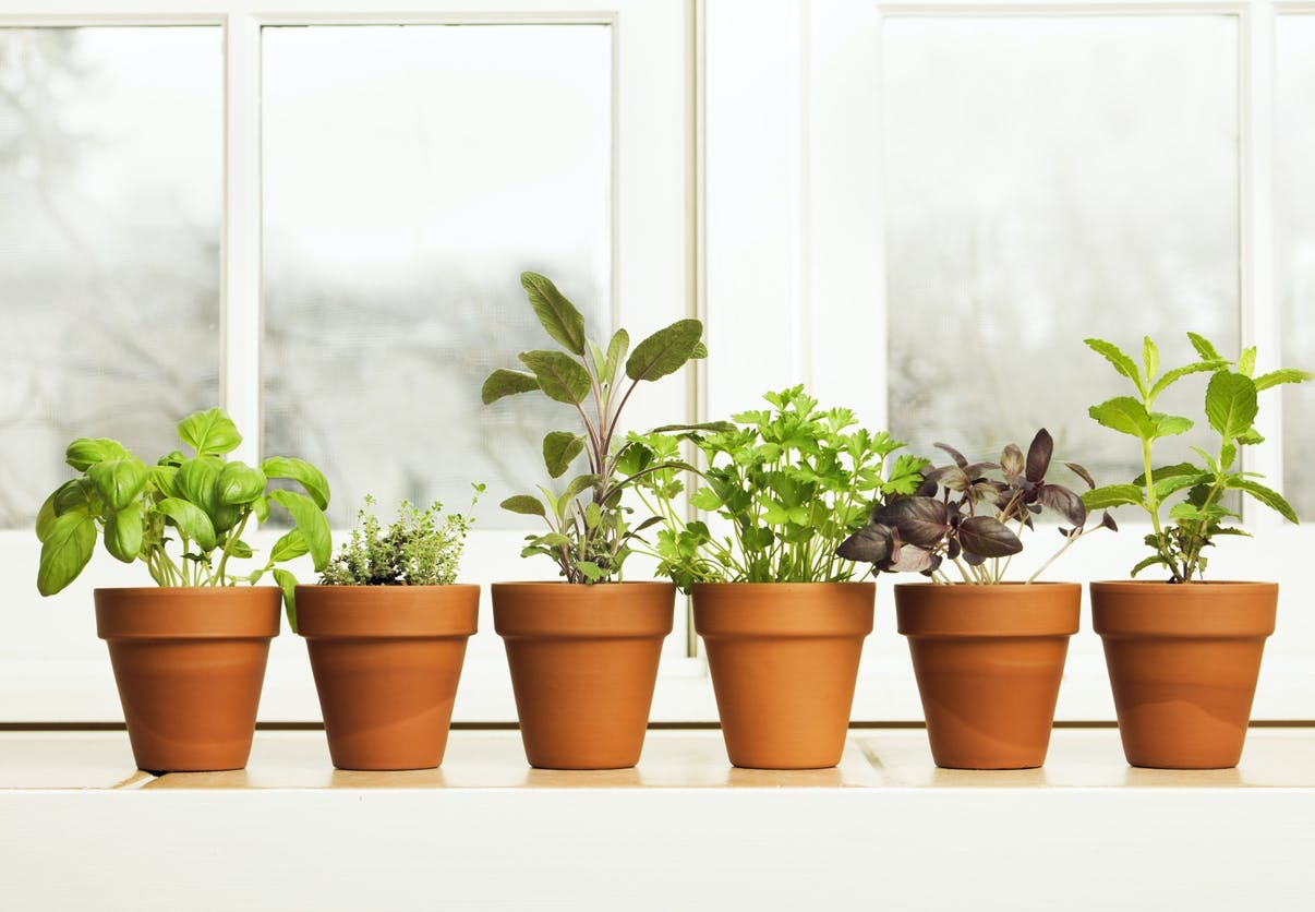 planter stiklinger