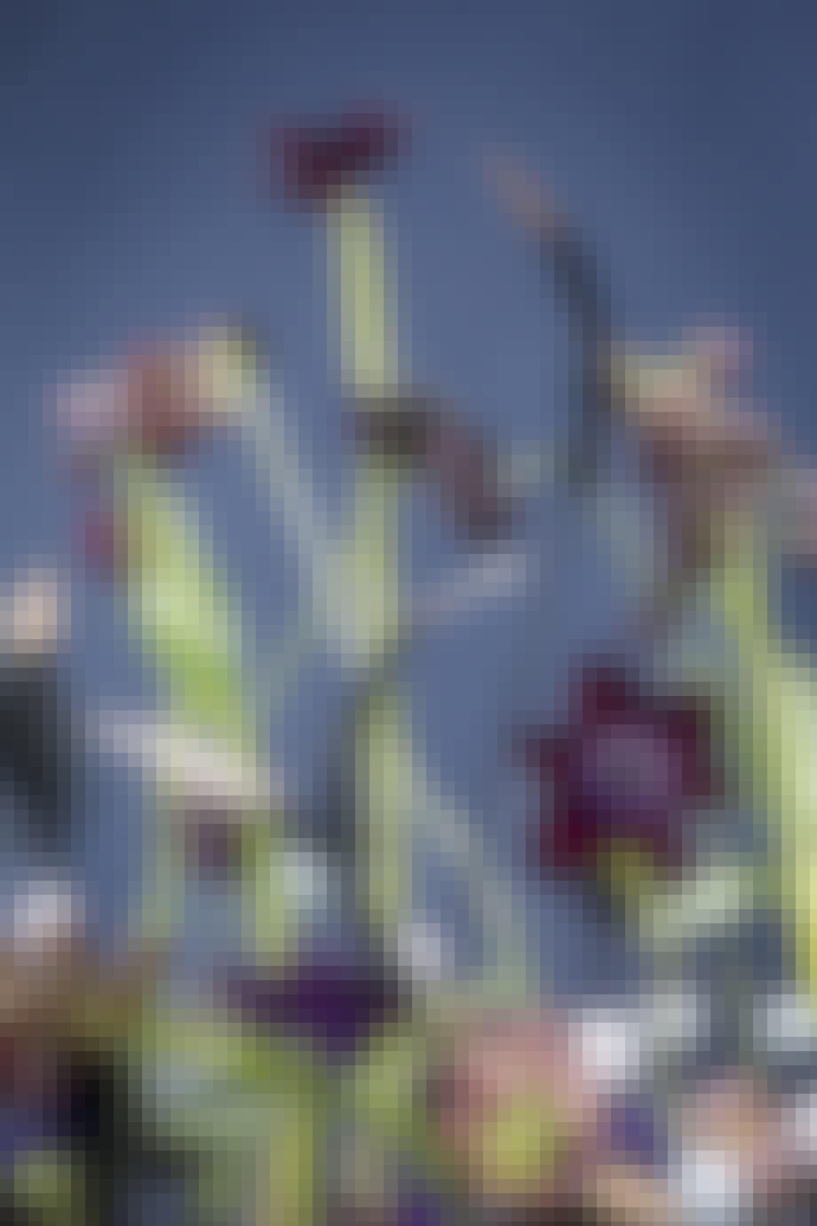 blomsterdekoration blomster vibeæg annette von einem
