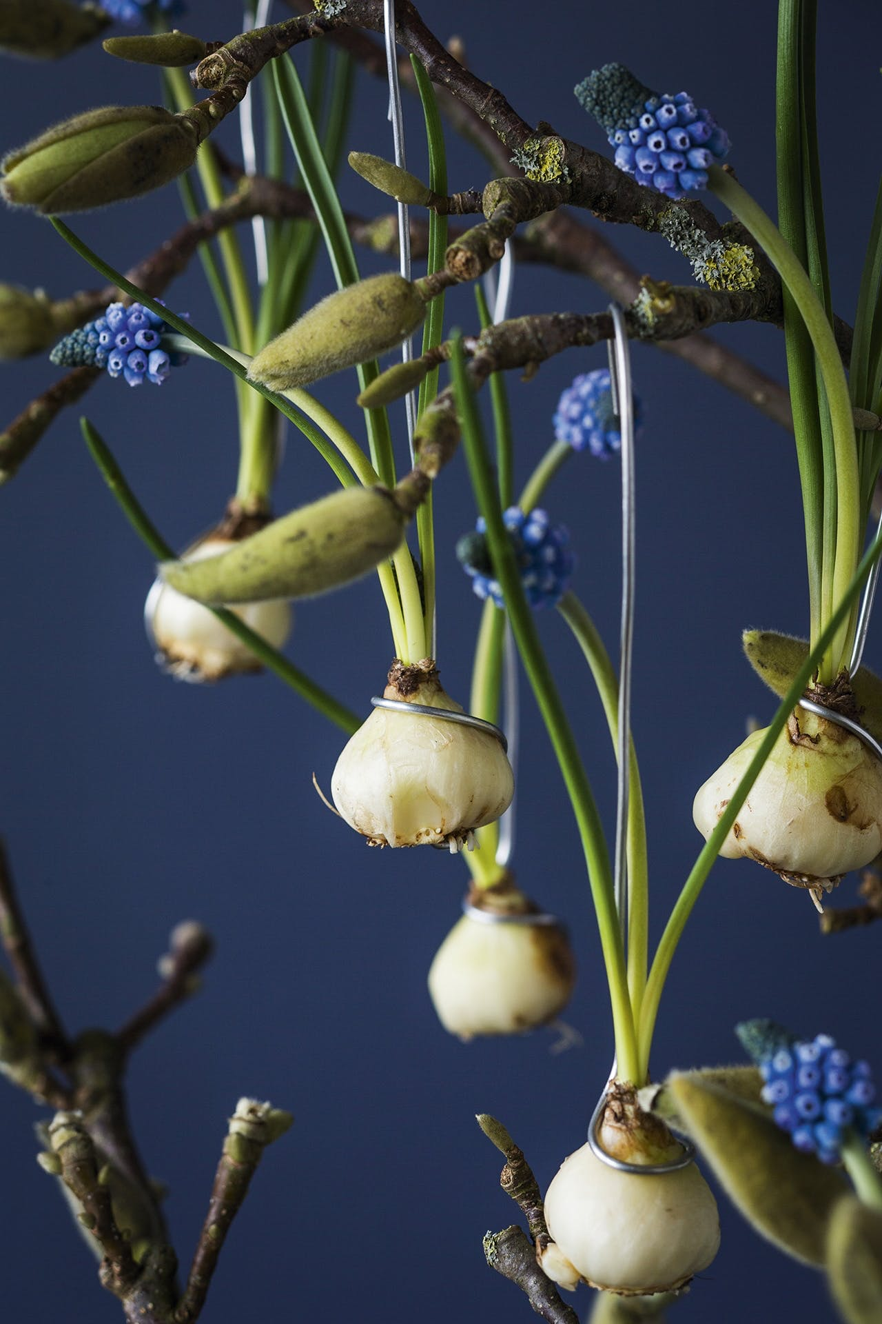 perlehyacinter på magnoliegren af blomsterdesigner annette von einem