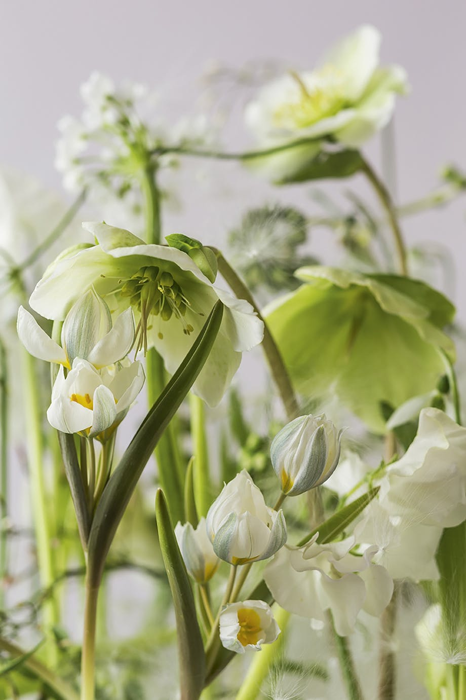blomster nærbillede af blomsterdekoration af annette von einem