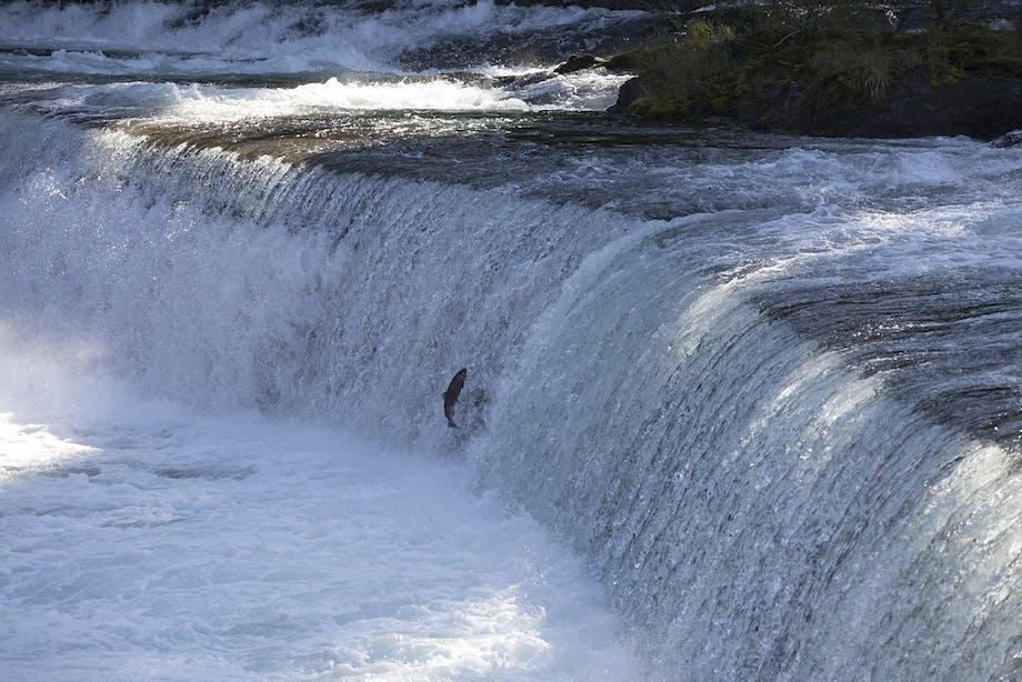 lakseelv laks elv flod canada erik juul