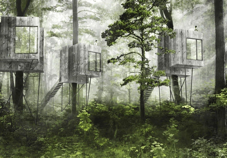 hoteller i trætoppene ved mariager fjord