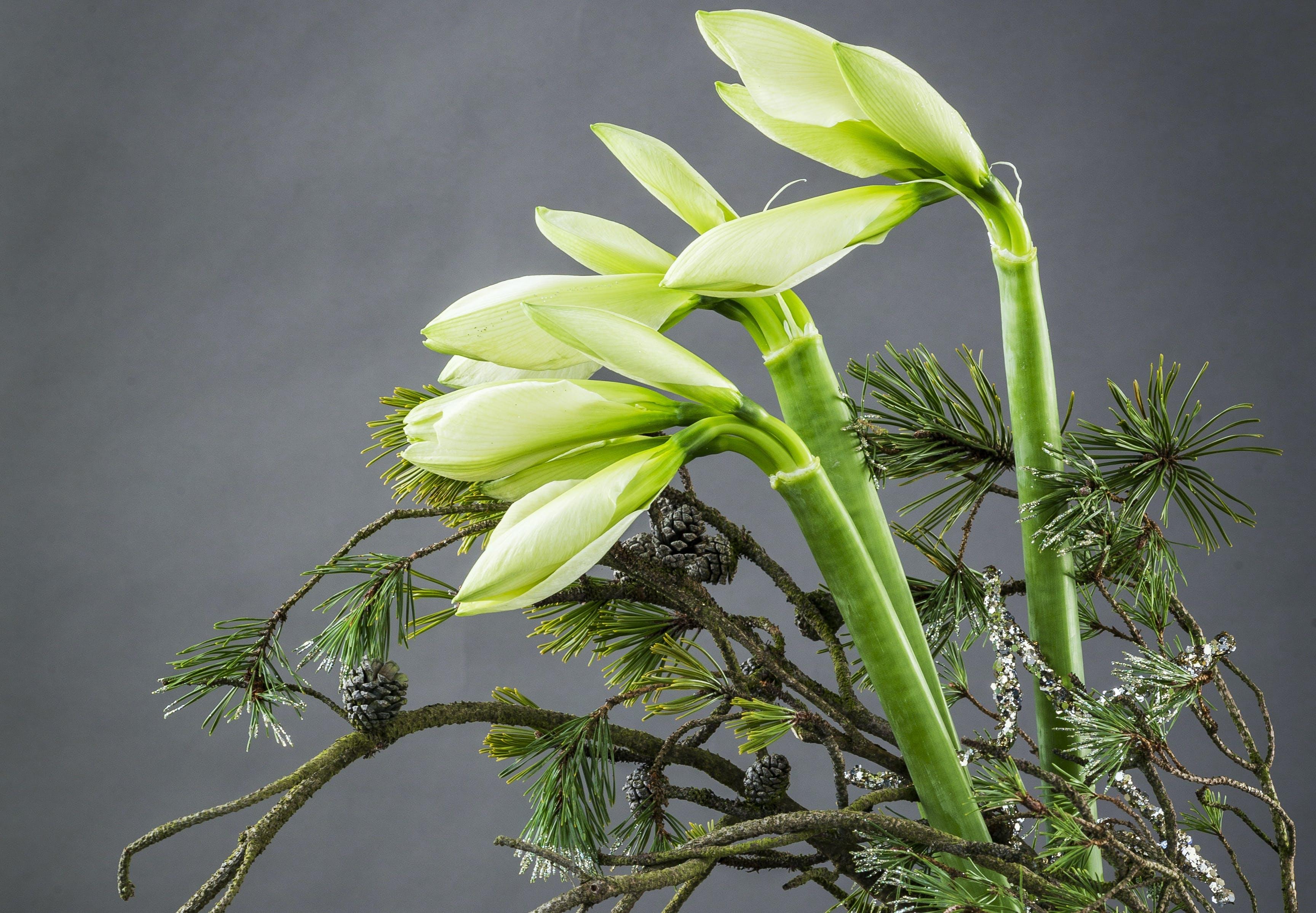 Annette von Einems julepynt amaryllis blomst med gran
