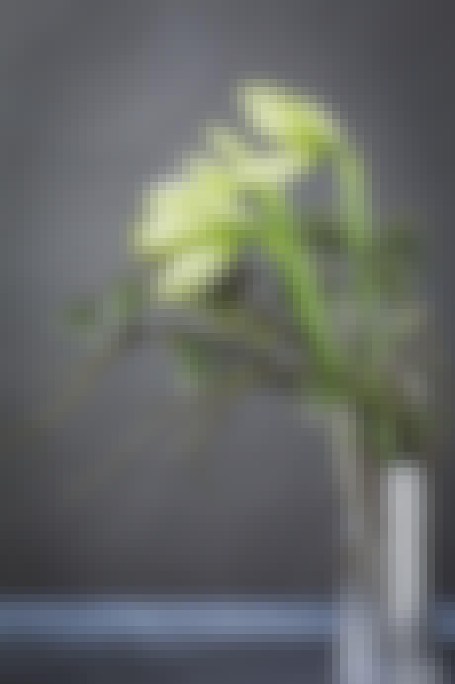 Annette von Einems julepynt buket af amaryllis og gran i georg jensen vase