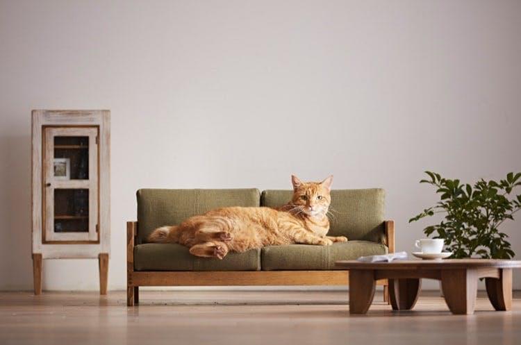 katte seng møbler dyr kat