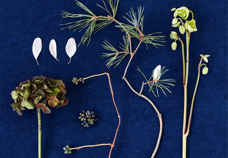 Plantemateriale til fremstilling af buket med juleroser
