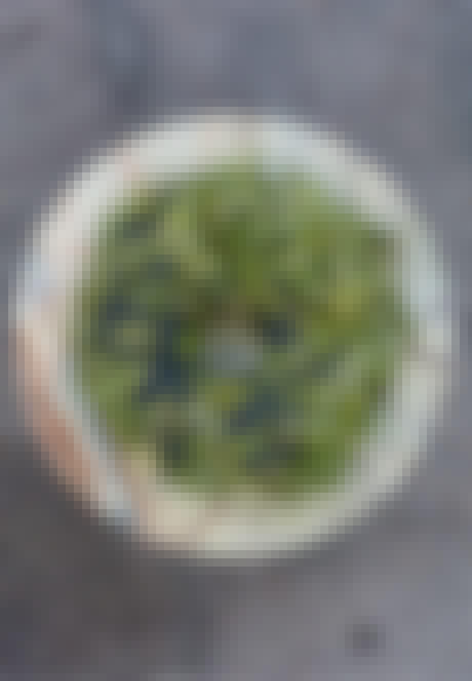 Grøn naturkrans cypresgran