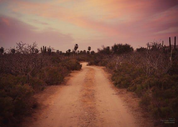 ViSSEVASSE plakat af vej mellem buske i røde farver