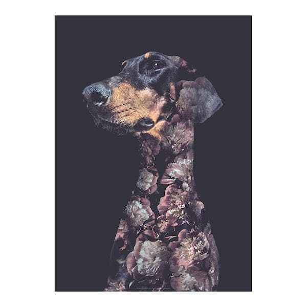 WhatWeDo plakat af hund med grafiske blomster på