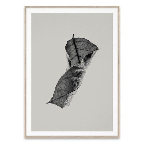 Paper Collective plakat af blad i grå farver