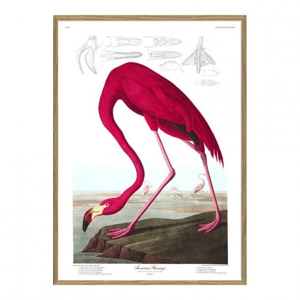 The Dybdahl Co. plakat af pink flamingo i vandkanten