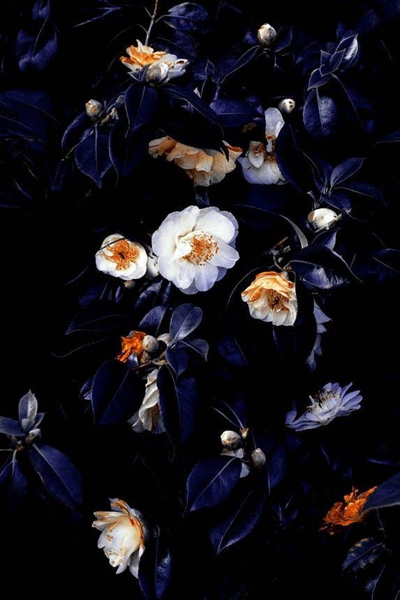 The Wall Market fotokunst af blomster i blå nuancer