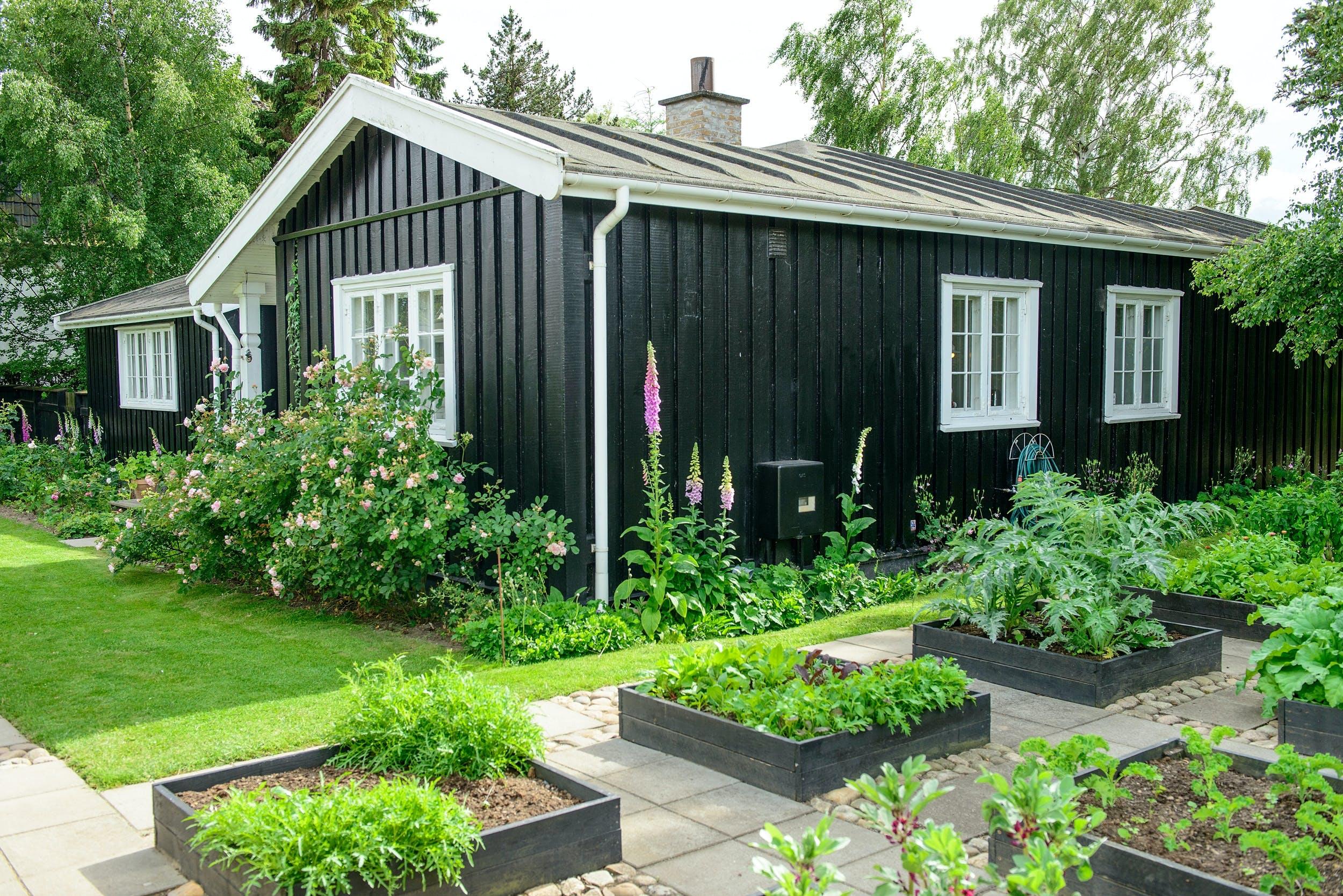 DET SORTMALEDE svenske træhus ligger midt på grunden, og haven omkranser det. Højbedene står skarpe og minimalistiske i dette rum i haven. På modsatte side ses en af de  otte belægninger i haven sammen med tidsler og blomster.