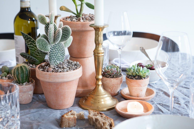 Bordopdækning med sukkulenter og kaktusser