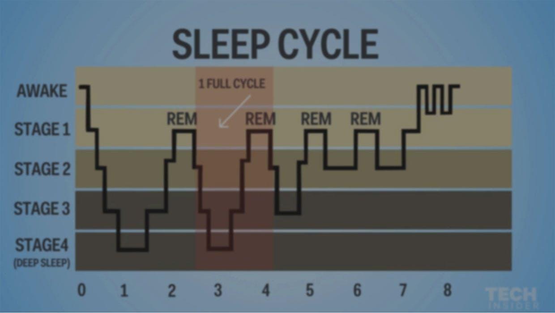 Søvncyklussen med den afbrudte cyklus til sidst på kurven.