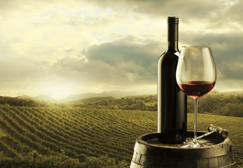 Udsigten til sin egen vinmark er næsten ikke til at stå for