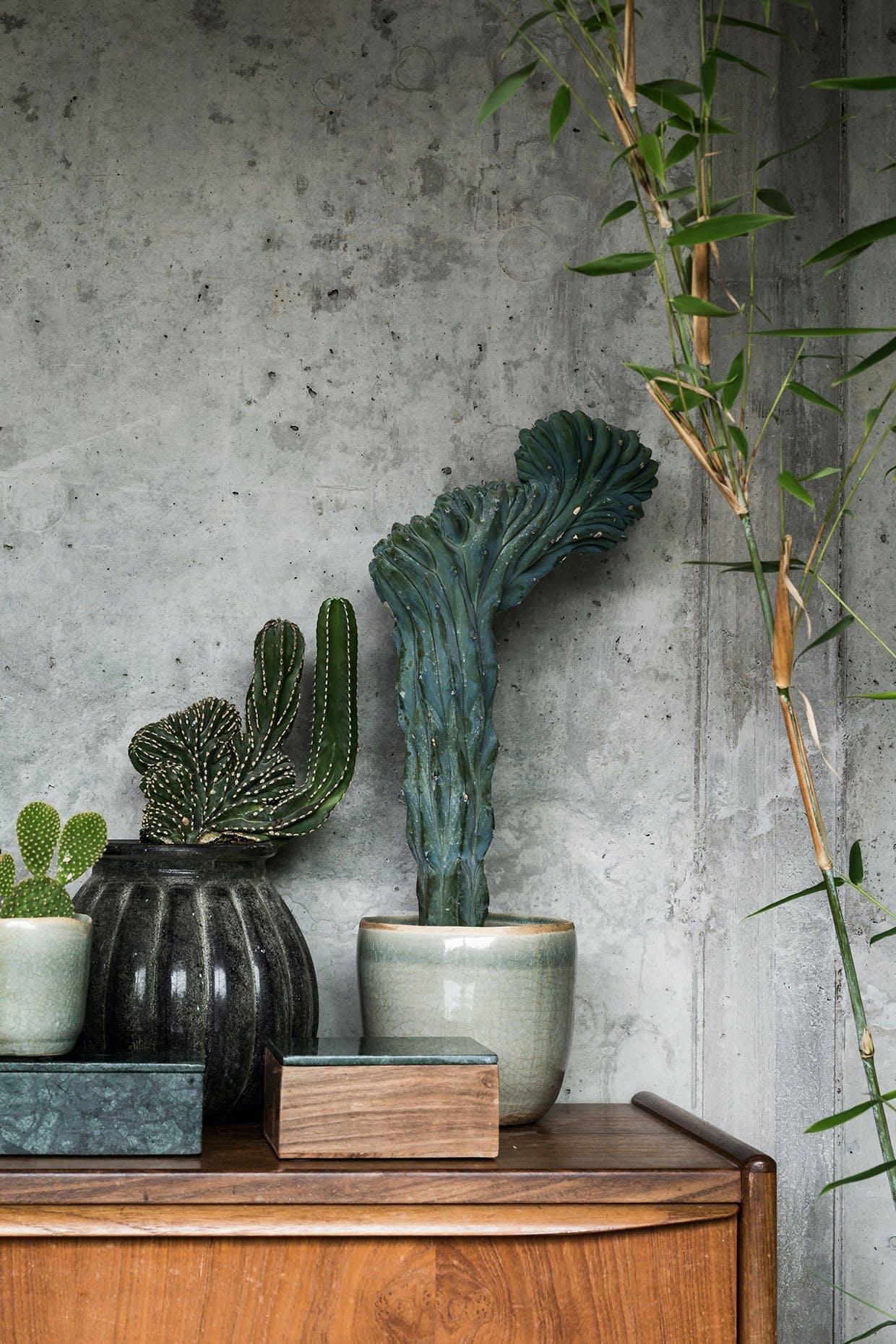 kaktus planter beton træ keramik