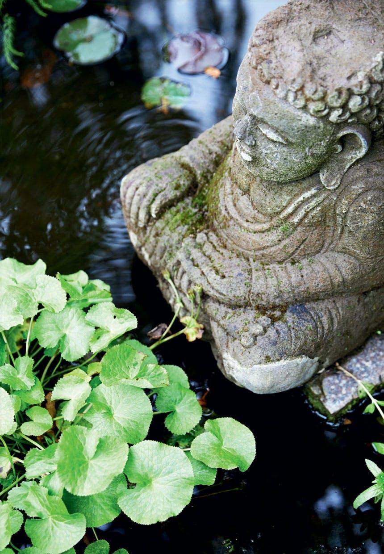 Buddha i guldfiskedam