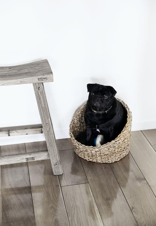 Familiens hund Hugo