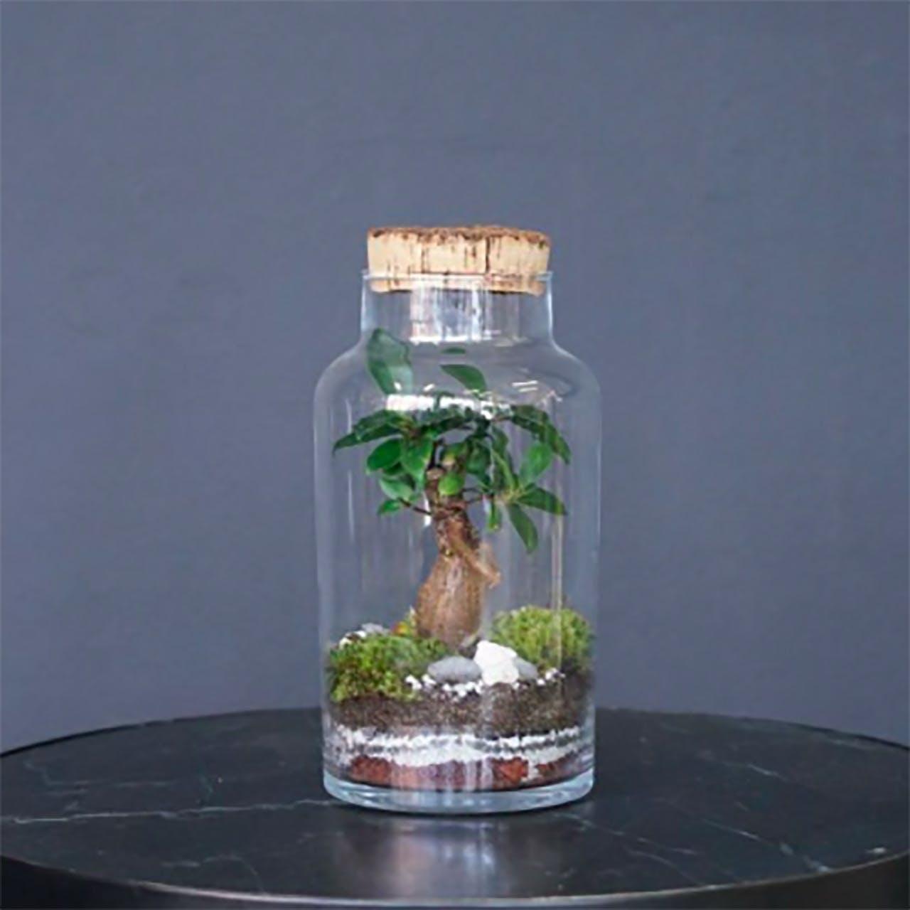 Areastore glasmontre med plante i og prop i toppen