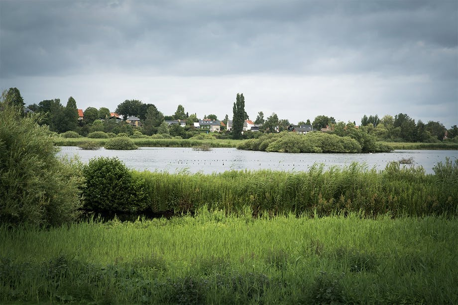 sø omgivet af grønne planter på frederiksberg
