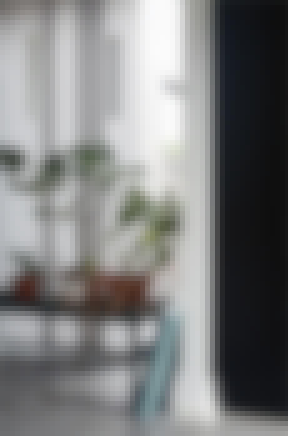 planter på en bænk