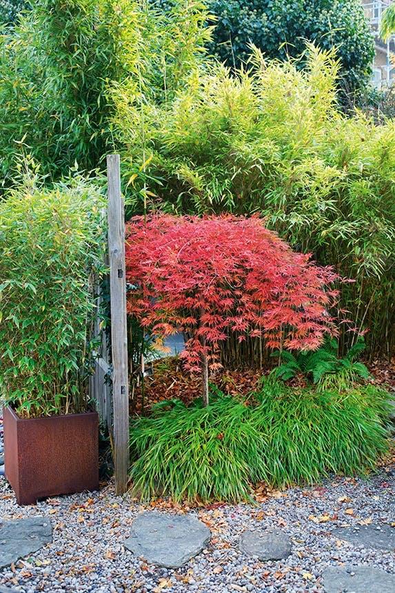 have med træer og bambus i en potte