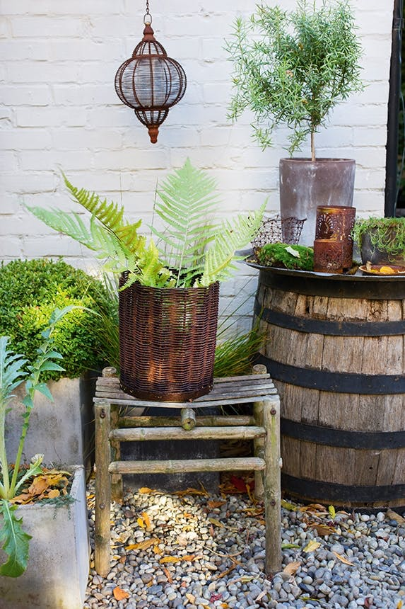 rosmarin, bregner og buksbom i kurve i en have