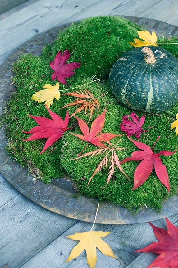 Et fad med mosser, et græskar og forskellige farver løv