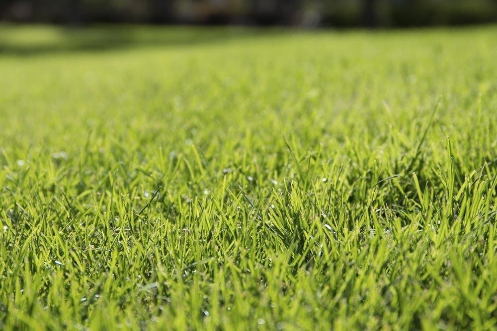 Hvad med min græsplæne?
