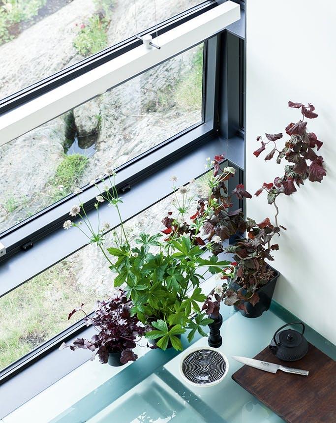 arkitekttegnet hus krydderurter i vindueskarmen