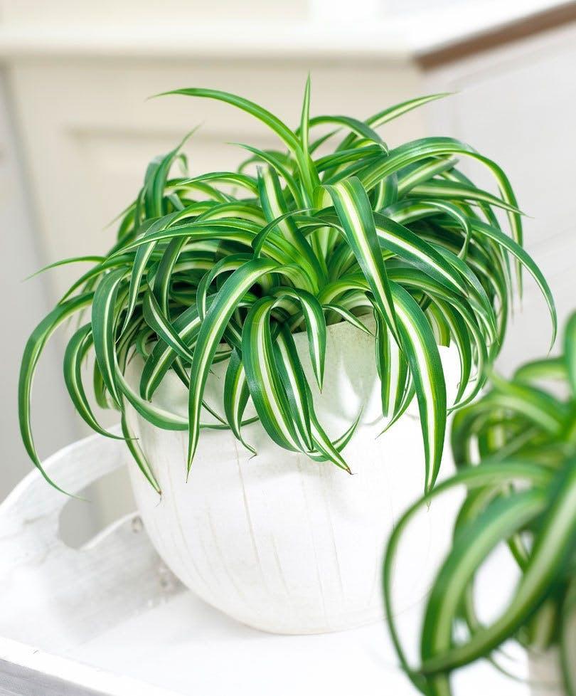 planter badeværelse grøn plante væddeløber