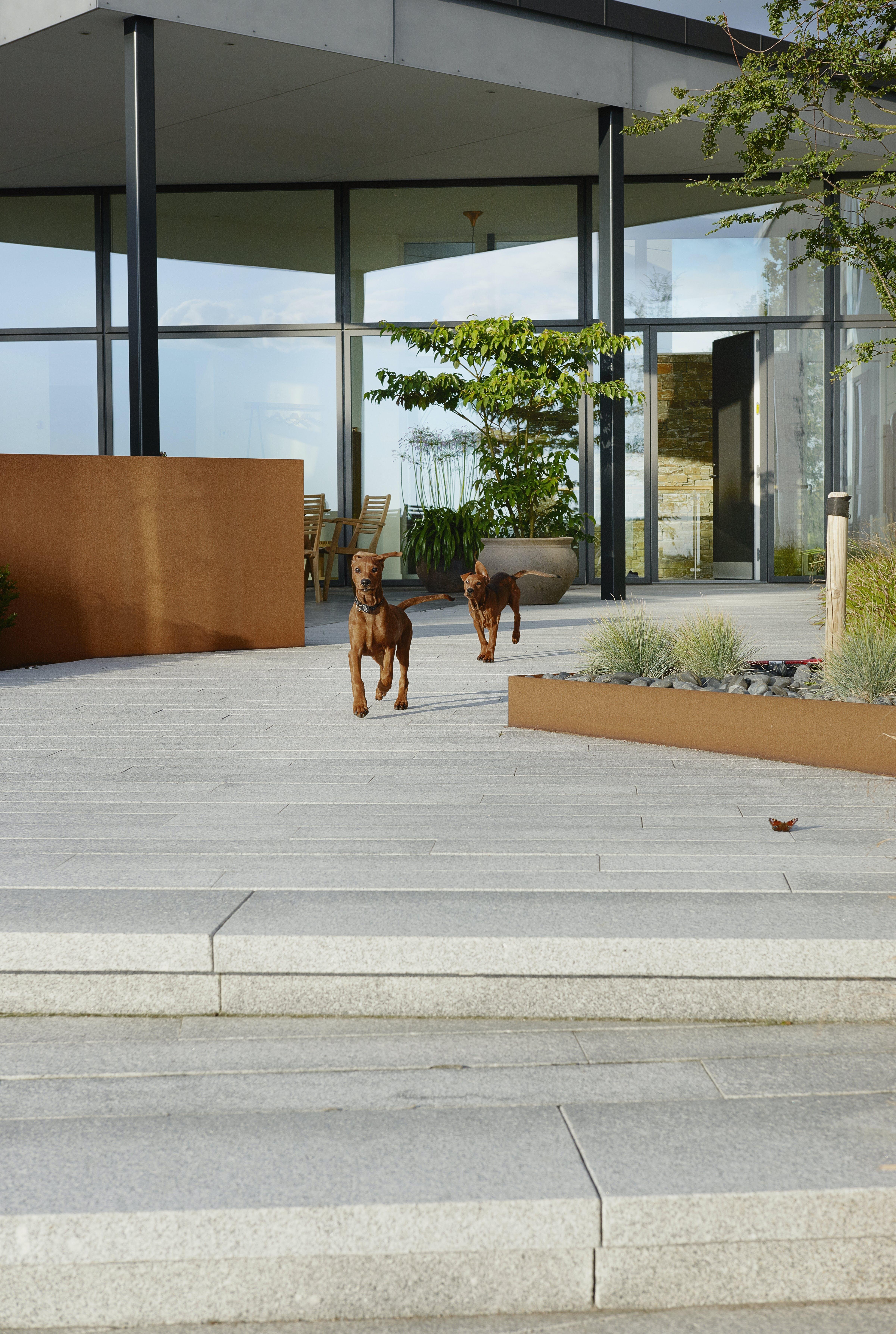 arkitektur bolig hunde