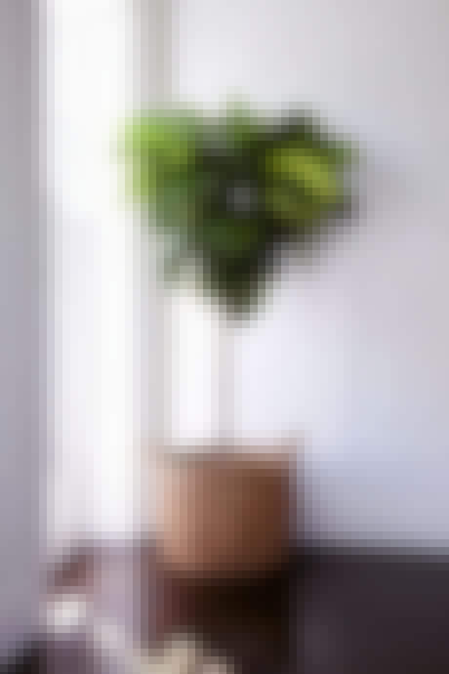 plante violinfigen