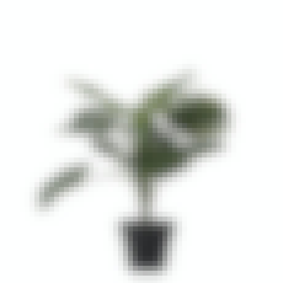 plante retro monstrea