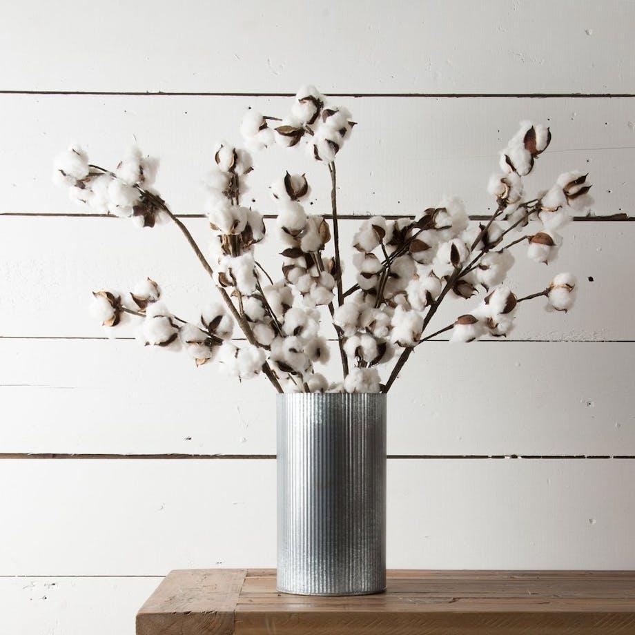 bomuldsgrene blomst tørret