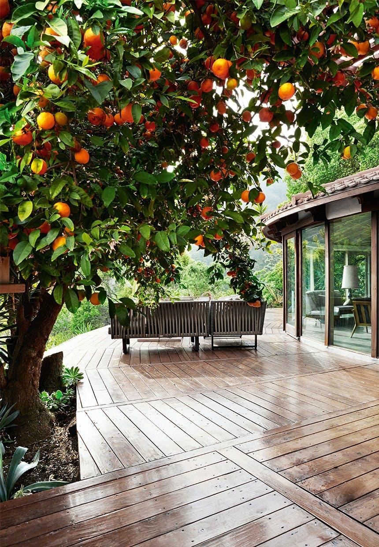 Ved træterrassen vokser et stort appelsintræ med frugterne hængende ind over terrassen