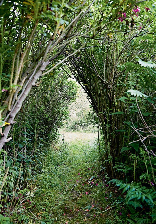 Grøn oase ved sommerhuset