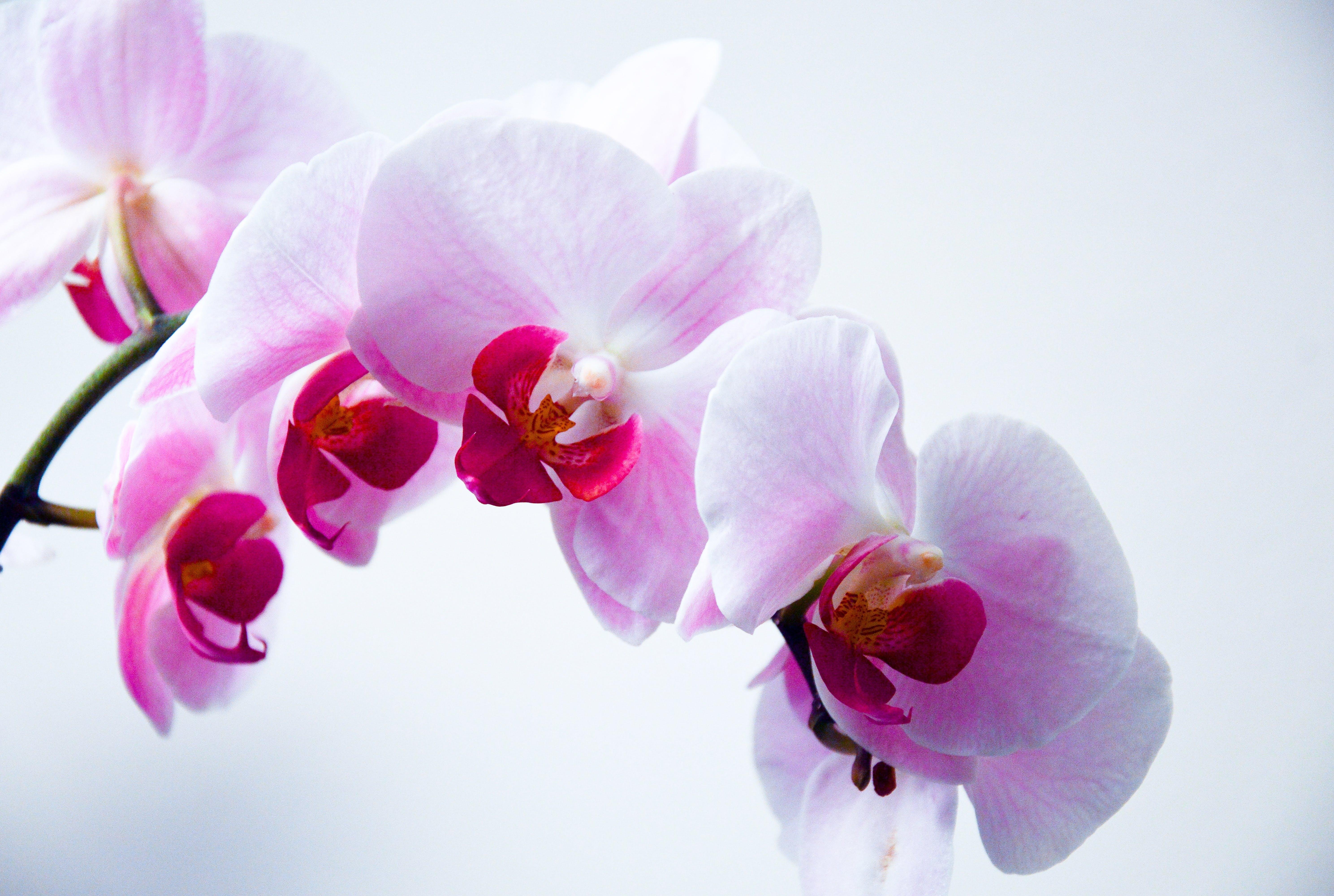 planter badeværelse orkide