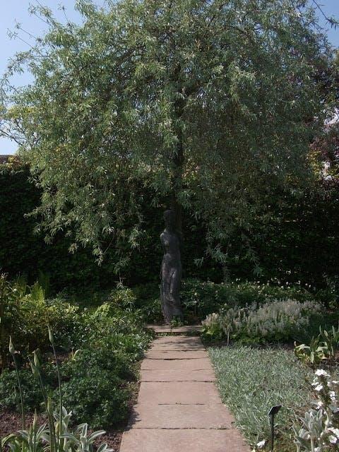 Måneskinstræet