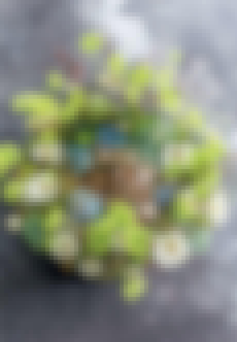 Hortensia-blomster i fad