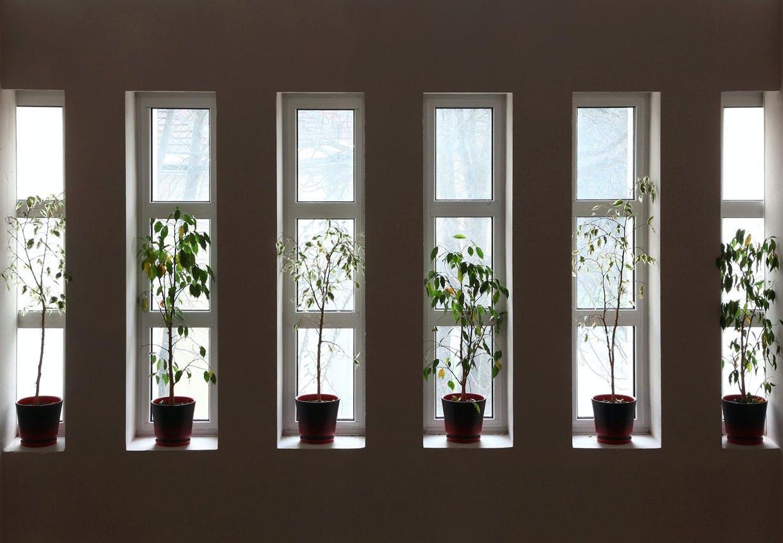 Luftrensende planter i soveværelset
