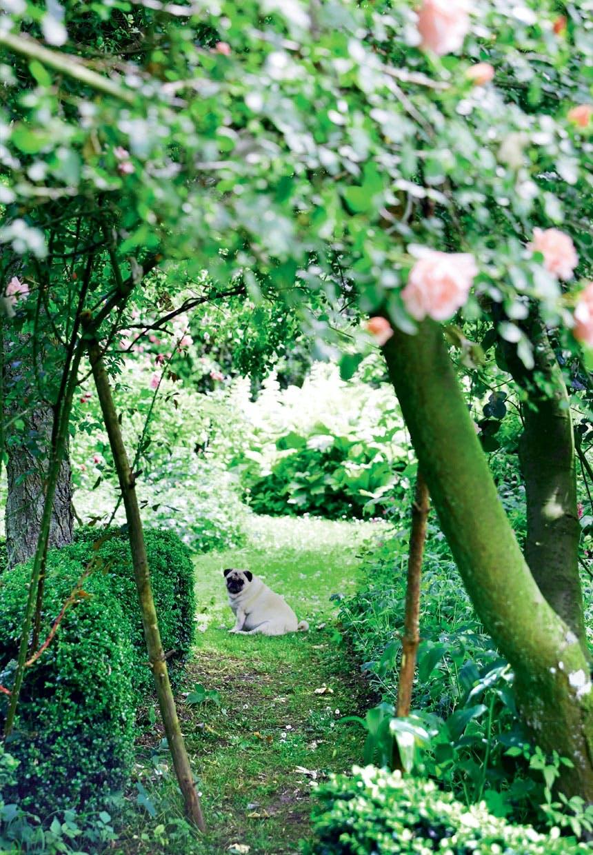 Parrets mobs under rosenbusk i haven