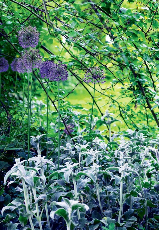 Have med høje blomster i lilla nuancer