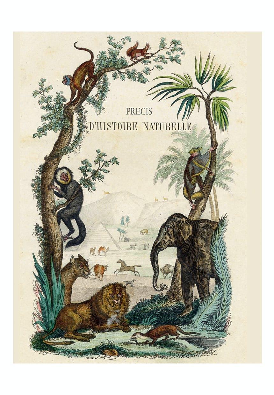 Notesbog med junglemotiv
