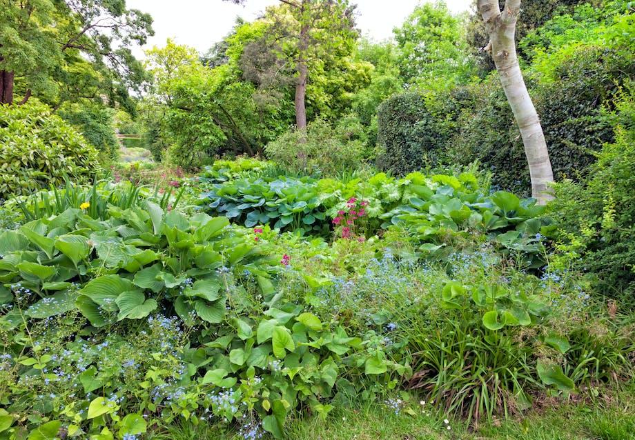 Kan man have en nordvendt - og frodig - have?